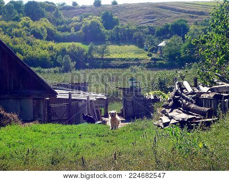 House in a village on a background of a summer lanscape