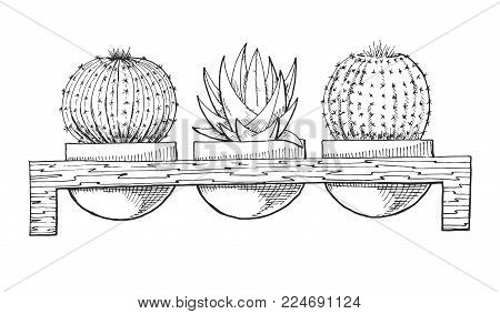 Sketch Of Three Succulents In Pots On A Wooden Stand. Vector Illustration Of A Sketch Style