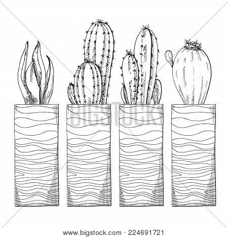 Sketch Of Succulents In High Pots. Vector Illustration Of A Sketch Style.
