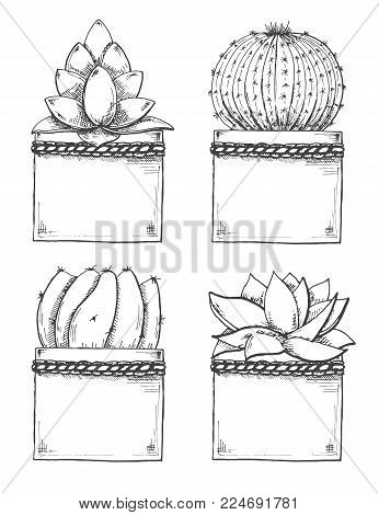 Sketch Of Succulents In Pots. Vector Illustration Of A Sketch Style