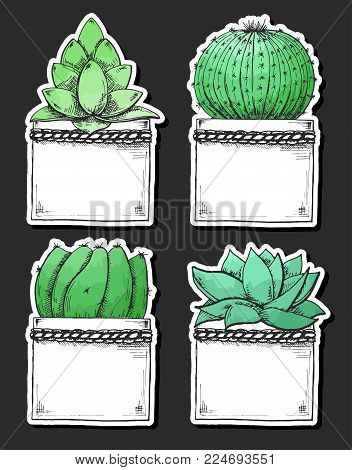 Sticker pack of succulents in pots. Stylized watercolor. Vector illustration