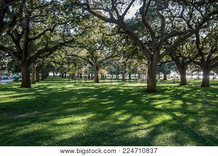 Shadows of live oak trees falling along the lawn of White Point Garden