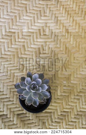 Small succulents pot on the table, stock photo
