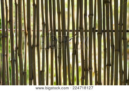 Reed fence in backlight. Natural background.