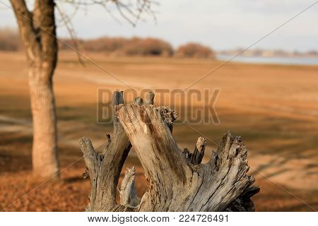 a fallen dried tree without leaves on the shore of the Volga. Astrakhan Region. Russia. Concept: withering loneliness death old age ruin death end