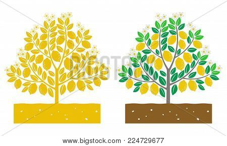isolated lemon tree with fruit vector illustration