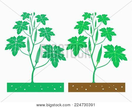 isolated okra plant with product vector illustration