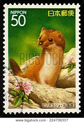Moscow, Russia - February 02, 2018: A stamp printed in Japan shows Siberian Weasel (Mustela sibirica), series