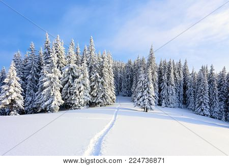 On a frosty beautiful day among high mountains are magical trees covered with white fluffy snow against the magical winter landscape. Scenery for the tourists. The wide trail leads to the beautiful winter forest.