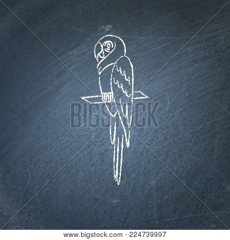 Macaw ara parrot icon sketch on chalkboard. Brazilian tropical bird symbol drawing on chalkboard.
