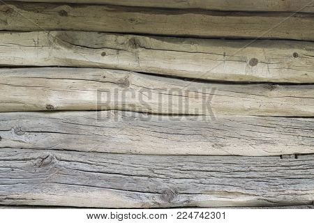 old wooden background of five curves of curved oak logs with twigs, front view