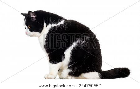 Mixed breed cat sitting against white background