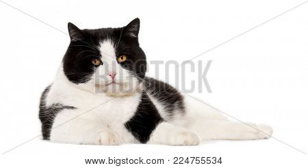 Mixed breed cat lying against white background