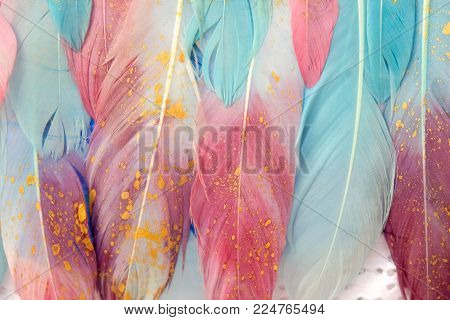 Multi Colored And Colorful Tropical Feather Background Cosmic Color