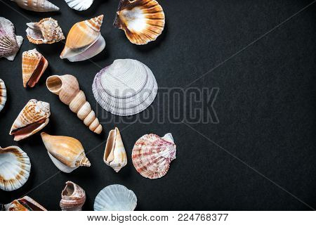 different sea shells on a black background. black background can be used for your text