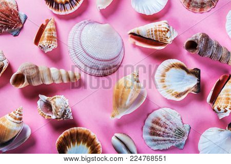 different sea shells on a pink background