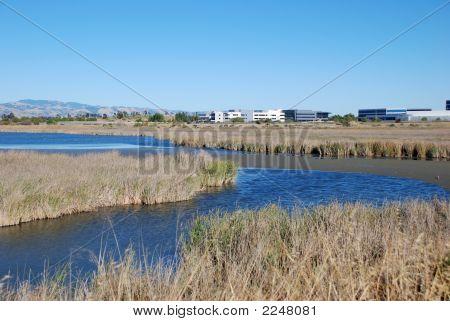 Wetlands16