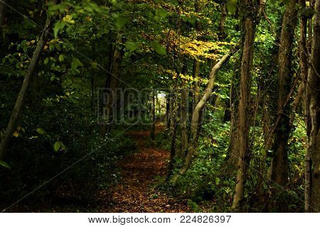 A forest pathway enriched with beautiful colours.