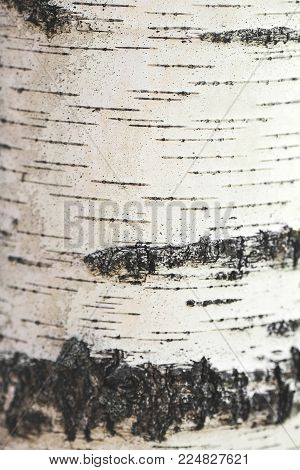 tree bark tree bark photo bark photo tree photo forest tree bark tree texture bark texture tree bark tree bark texture tree bark background old bark wooden bark old tree bark tree bark