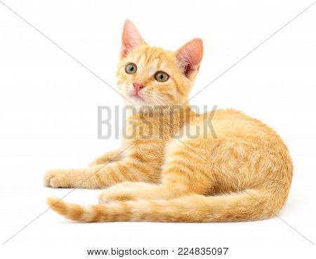 Small brown kitten isolated on white background.