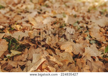 background from the heap of old withered leaves fell in the fall