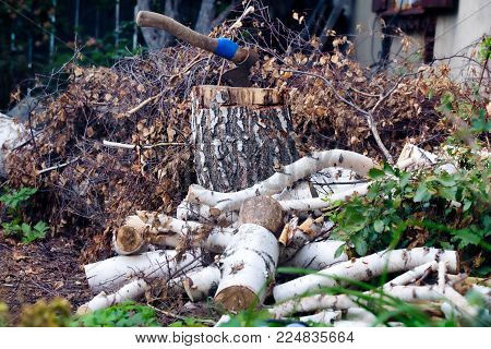 An ax thrust into a wooden log. A heap of birch branches and woods around. Rustic scenery.