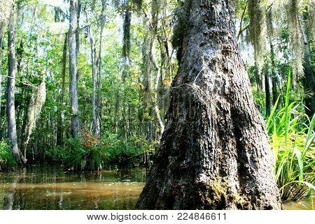 Textured tree in Louisiana Bayou with dappled light