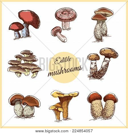 Collection of edible hand drawn mushrooms isolated on white background. Vector illustration