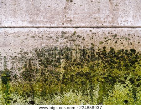 Mold Thickly Covers A Wall. Black, Dark Green, Light Green And White Mold, Mildew And Fungus Appear