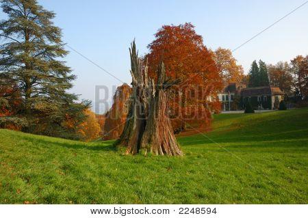 Sequoia Stump