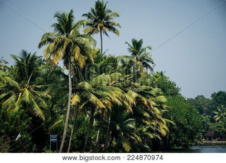 Alappuzha, India - January 09 2018 : Beautiful View Of Coconut Trees In Alappuzha, Kerala, India