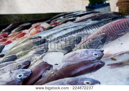 Close Up Of Fish In Fish Market In Fort Kochi, India.