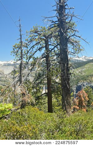 Beautiful Forest With Infinite Views To A Waterfall From One Of The Mountains Of Yosemite National Park. Nature Travel Holidays. June 29, 2017. Yosemite National Park. Mariposa California. USA. EEUU