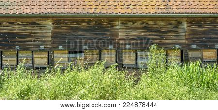 facade of a beehouse with lots of apiaries in sunny ambiance