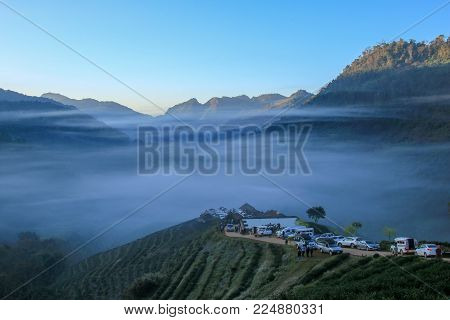 CHIANG MAI, THAILAND - 19 January 2018 : Top view of Tea plantation 2000 and the mist that floated on the mountain at Doi Ang Khang , Chaing Mai, Thailand.