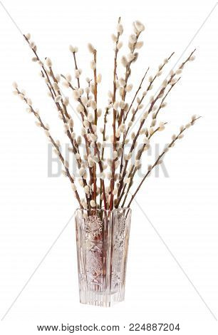 Willow bouquet with pussy willows in lead crystal glass vase, vertical, on white background.  Bunch of branches with furry catkins. Salix. Front view. Photo.