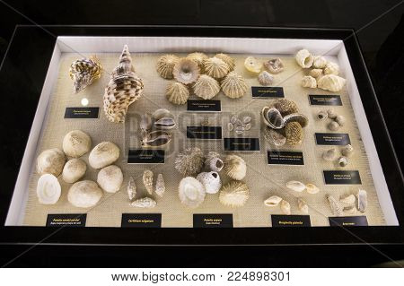 Lanzarote, Spain - January 19th 2018: A Display Cabinet Displaying Different Shells At Castillo De S