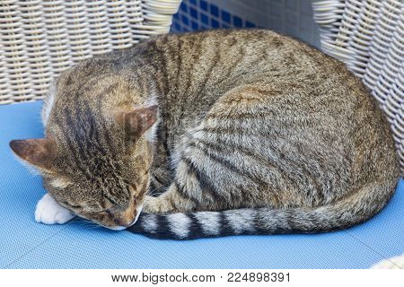 A Street Cat Snoozing On A Restaurant Chair In A Spanish Town.