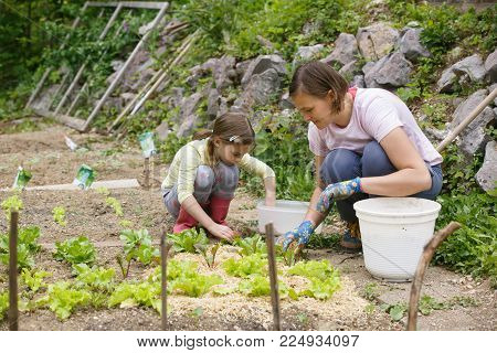 Mother and daughter working together in the vegetable garden. Quality time, mother-daughter relationship, bonding and homegrown organic food concept.