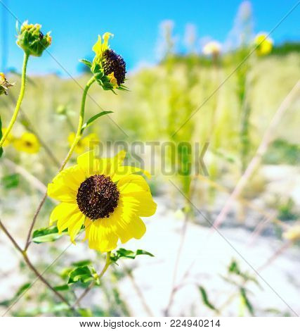 Field yellow flowers image photo free trial bigstock field of yellow flowers in colorado spring time mightylinksfo