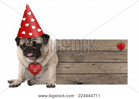 grumpy Valentines's day pug dog puppy with party hat sitting down next to wooden sign, isolated on white background