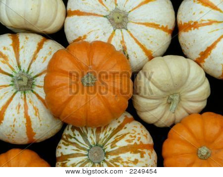 Pumpkins In A Group