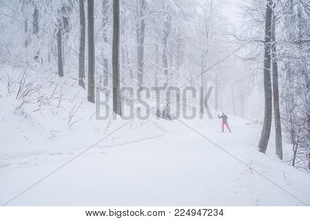 Two Nordic Ski Sports Man In Winter Forest