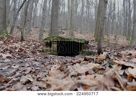 a secret hideout found in the forest