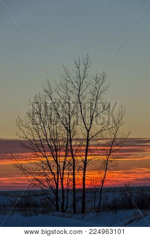 Bare trees highlighted by a blue sky and a beautiful winter sunset