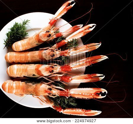 Four Delicious Raw Langoustines with Rosemary on White Plate cross section on Dark Wooden background