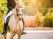 Elegant rider woman and cremello or pearl horse. Beautiful girl at advanced dressage test on equestrian competition. Professional female horse rider, equine theme. Saddle, bridle, boots and other details. poster