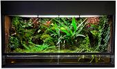 terrarium for rain forest pet animals like exotic and tropical frogs lizards and snakes. poster