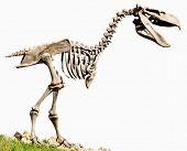 Phorusrhacidae carnivorous flightless birds replica fossil animals theme poster