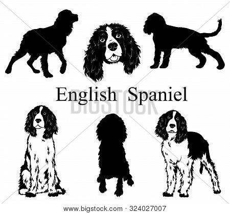 English Spaniel Set. Collection Of Pedigree Dogs. Black White Illustration Of A English Spaniel Dog.